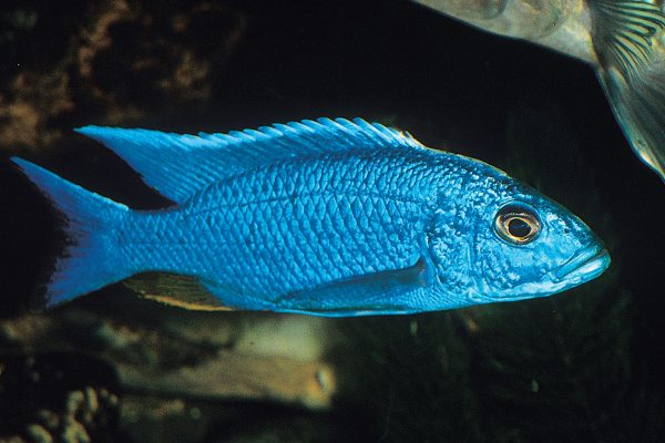 Tropical Fish Export