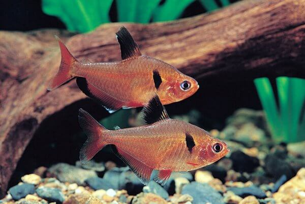 View products jy lin trading ornamental fish exporter for Ornamental carp fish