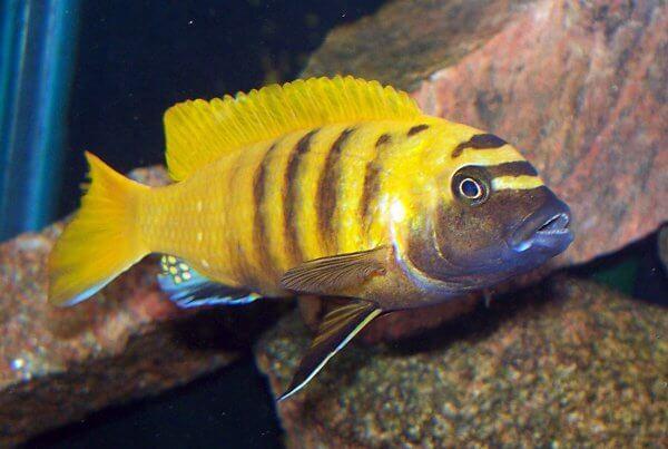 Ornamental & Aquarium Fish Wholesale Exporter - Jy Lin Trading